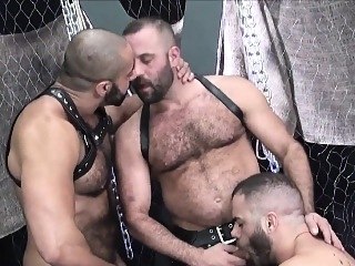 Suspended bear jerks out cum in bareback trio bareback (gay) bears (gay) blowjob (gay)